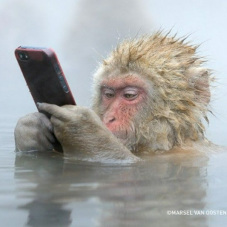 Funny Monkey With Morden Technology