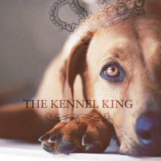 The Kennel King