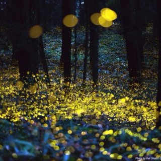 The Fireflies Come Out