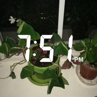 my plants are sleeping