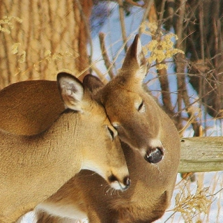 I'm very fawnd of you, my deer