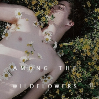 among the wildflowers