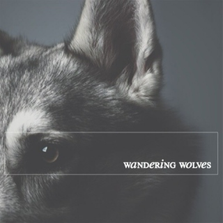 wandering wolves