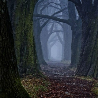 Ghostly Forest