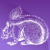 purplesquirrel
