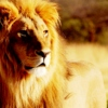 thelionsheart