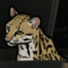 Babou The Ocelot