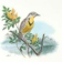 the_meadow_lark