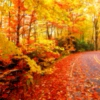 Let the Autumn Air Surround You