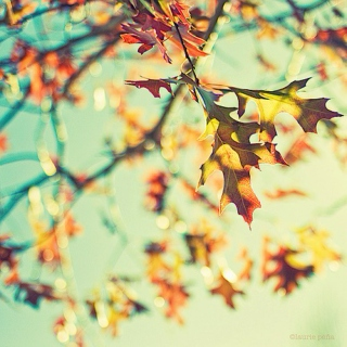 The winds of fall....