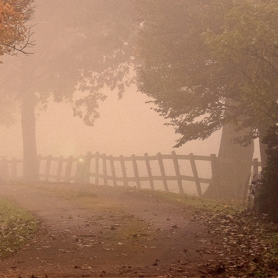 Gaze with me through the mists of fall