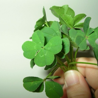 Four Leaf Clovers and Prayer Flags