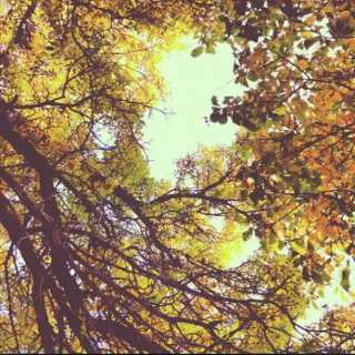 //a walk in the leaves.