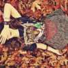 Falling Leaves and Firesides: Fall 2012