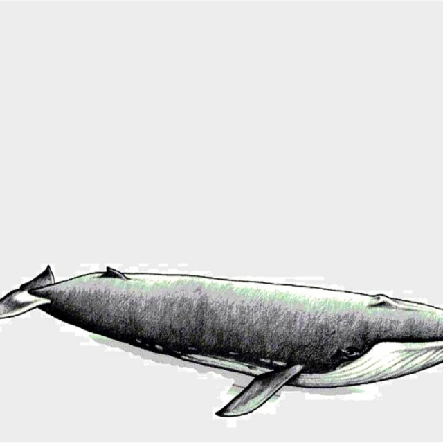 introduction to cetacea