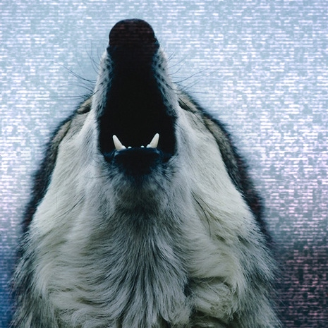 A Winters Howl