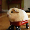 See me Rollin'