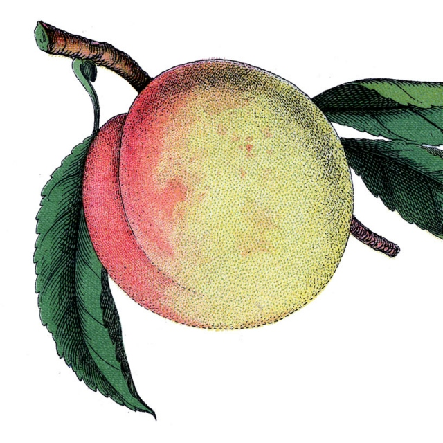 do i dare to eat a peach? ❦