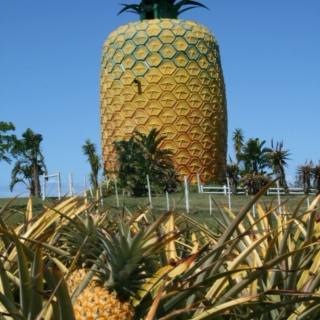 The Pineapple Incident