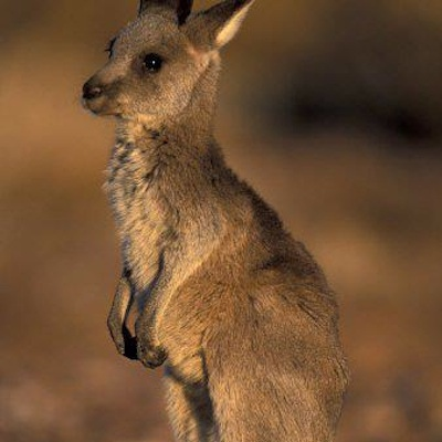 Love is Just Make Believe (Dreamt I Was Carried in a Kangaroo's Pouch)