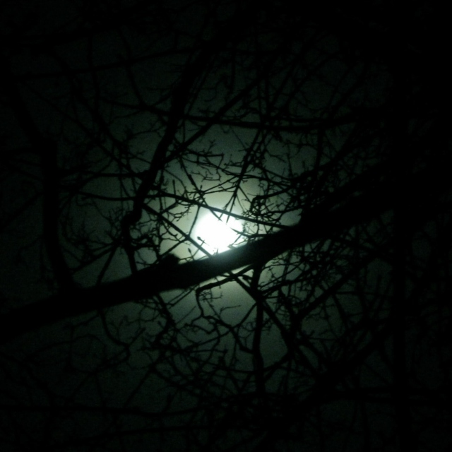 Nocturne IV - The Moon with Silent Delight