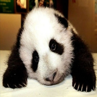 Introspective:That Makes Me A Sad Panda