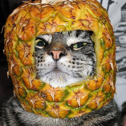 The Purring Pineapple