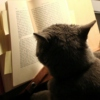 Classical Music for Studious Cats