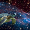 Space Turtle Lullaby.