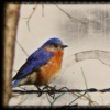 there´s a bluebird in my heart