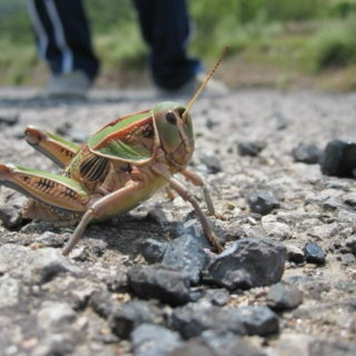 Keep Up the Studying, Grasshopper.
