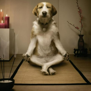 Yoga, anyone?!