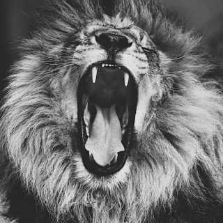 The Lion´s Roar.