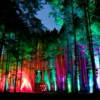 planting seeds for the electric forest