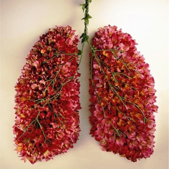 The fauna and flora of the lungs.