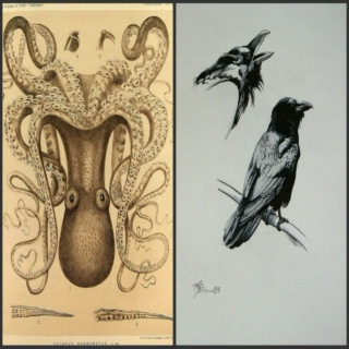 The Octopus and the Raven