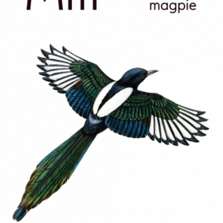 May mix (mostly magpie)