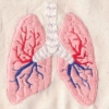 Between two lungs.