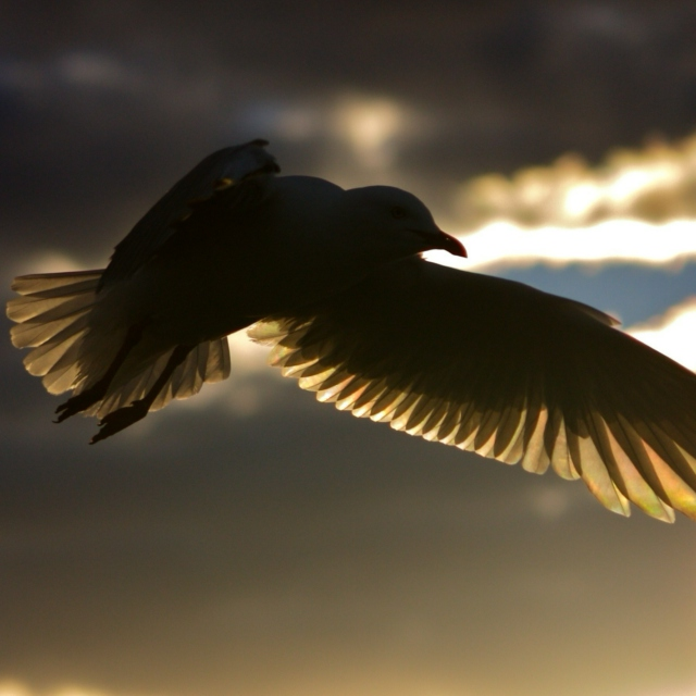 Soaring without anything