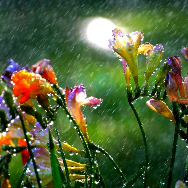 A Raining Day in June