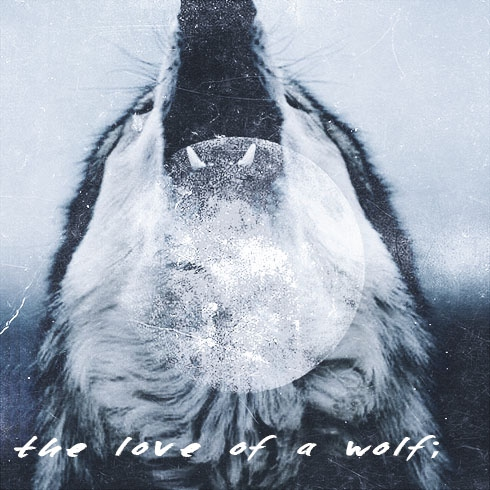 the love of a wolf;