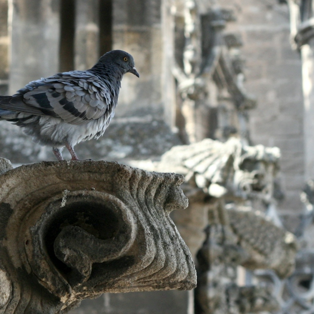Church of the Holy Pigeon