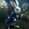 Chasing The White Rabbit