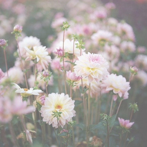 ✿stop and smell the flowers✿