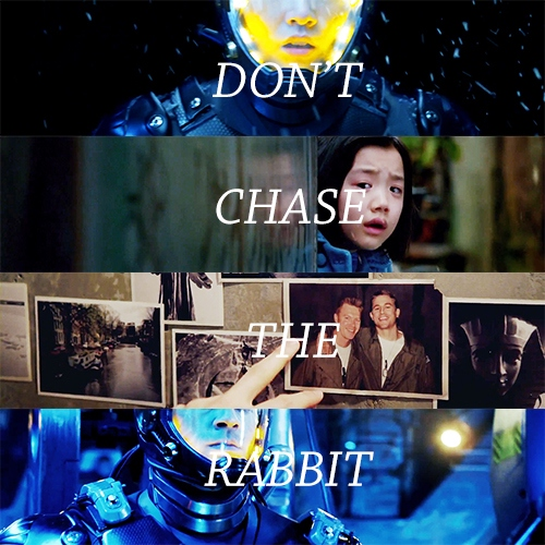 don't chase the rabbit