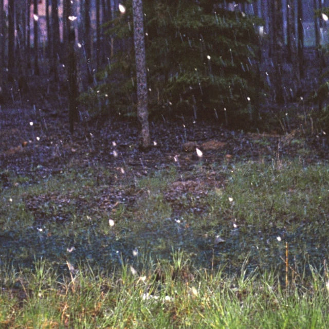 forest playlist