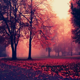 All the Autumn Leaves