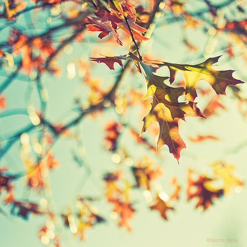 ✤ autumn leaves ✤