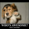 You. Are. Awesome