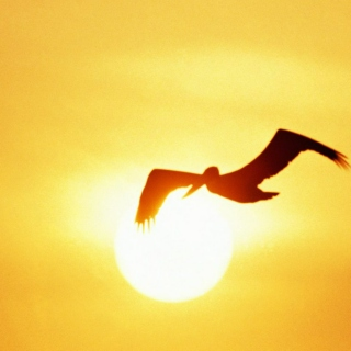 Fly Into the Sun